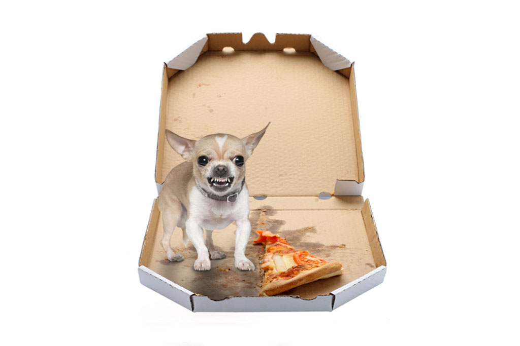 An angry chihuahua guards the last slice  of pizza.
